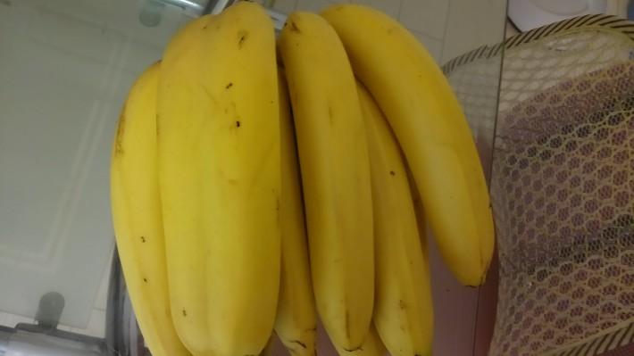 대륙의 쌍둥이 바나나