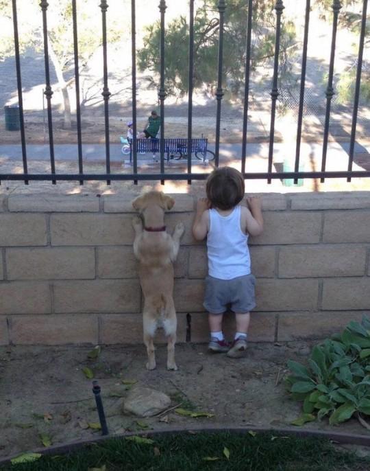아기와 동물들