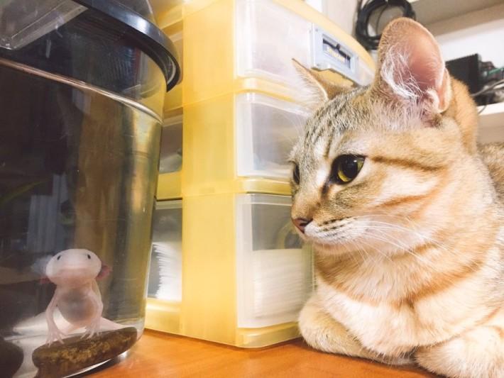 고양이 키우는 집에서 어항을 사면 안되는 이유