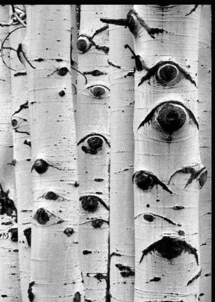 귀신 보다 무서운 나무!