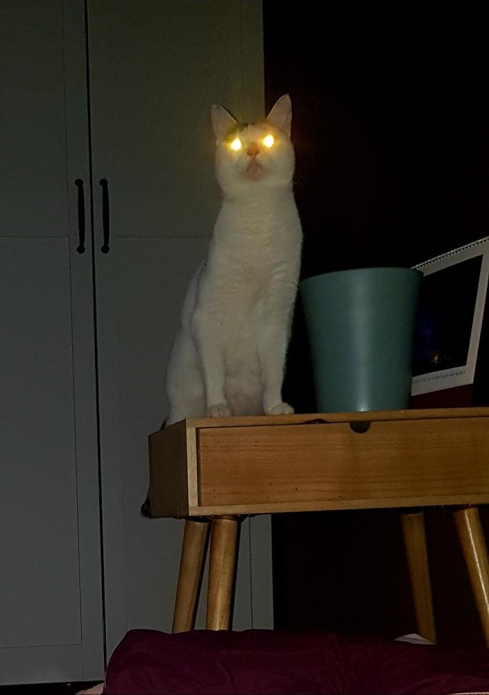 상향등은 매너가 아닙니다 고양씨~