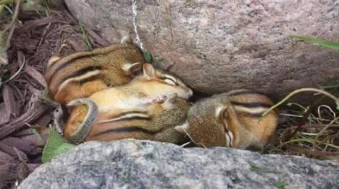 산에서 내려오다 발견한 다람쥐 가족