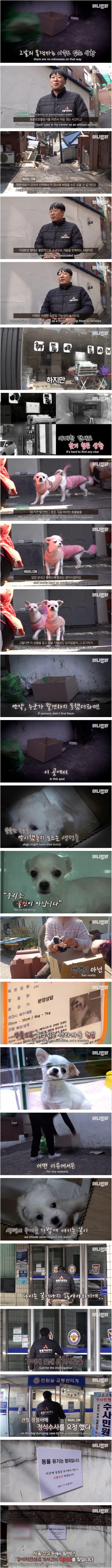 한 골목 쓰레기장에서 발견된 30마리의 새끼 강아지들