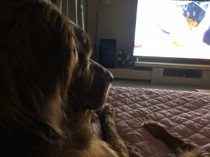 TV가 개에게 미치는 영향