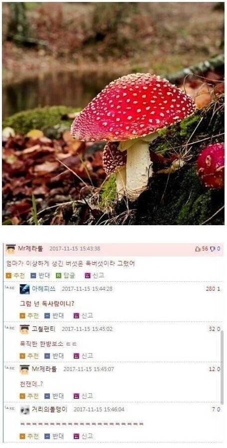 이상하게 생긴 버섯은 독버섯이래