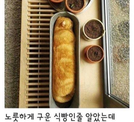 노릇하게 구워진 식빵한덩이