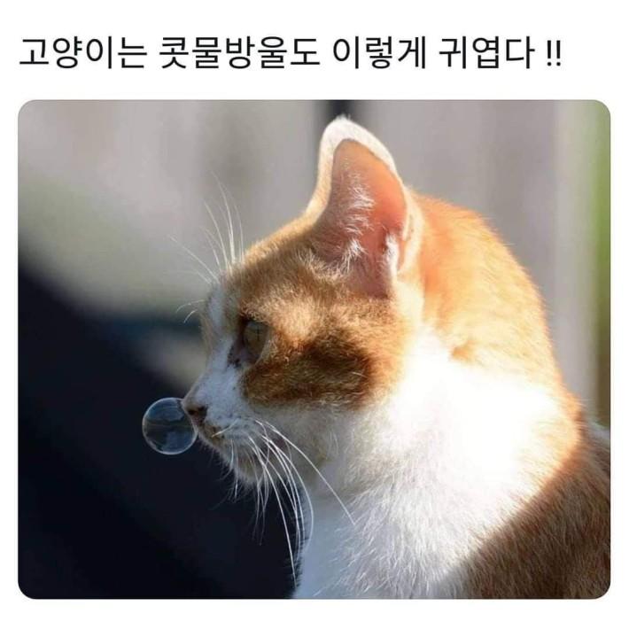 귀여움 주의)고양이 콧물방울