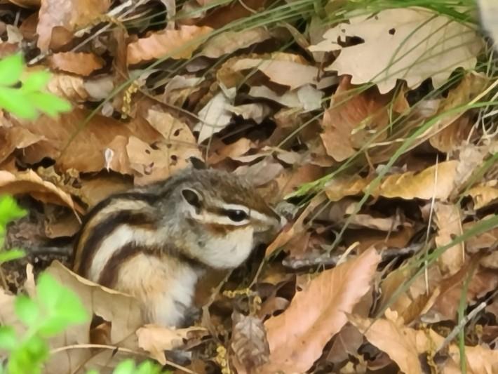 자연산 다람쥐