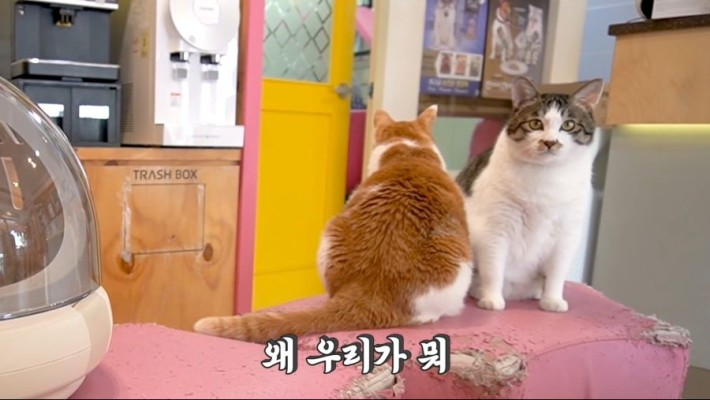 수의사가 말하는 고양이 성장의 비밀